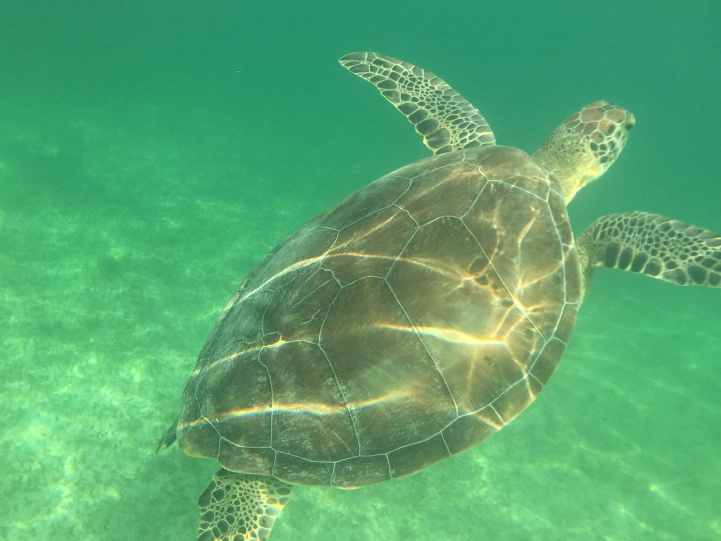Snorkelling with Turtles at Akumal Beach – the Ultimate Guide