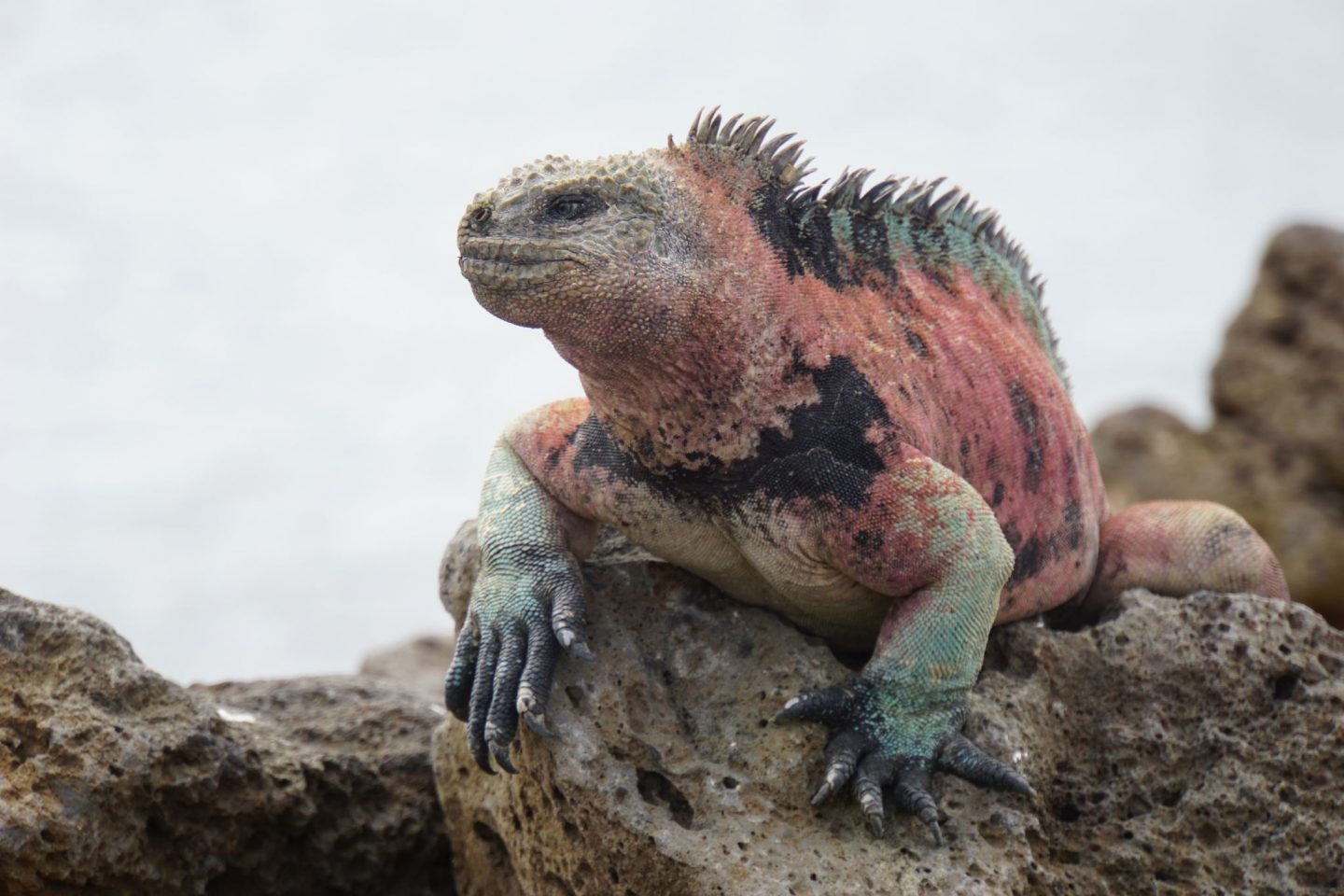 Animal Highlights of the Galápagos Islands – What Animals to See and Where